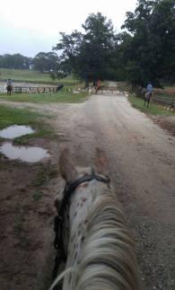 dotti-hound-walk-last-ride-before-remi