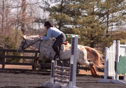Show Jumping at Poplar