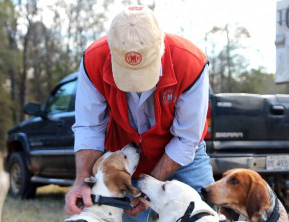 Robert Miller with hounds before the hunt.