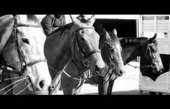 Julie's horses.